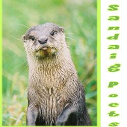 Sandaig Otter